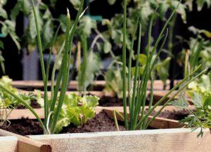 jardinage en famille